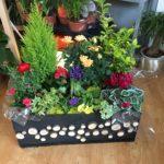 Compositions, jardin de plantes d'intérieur, l'Atelier Floral à Romilly sur Seine dans l'Aube, 10